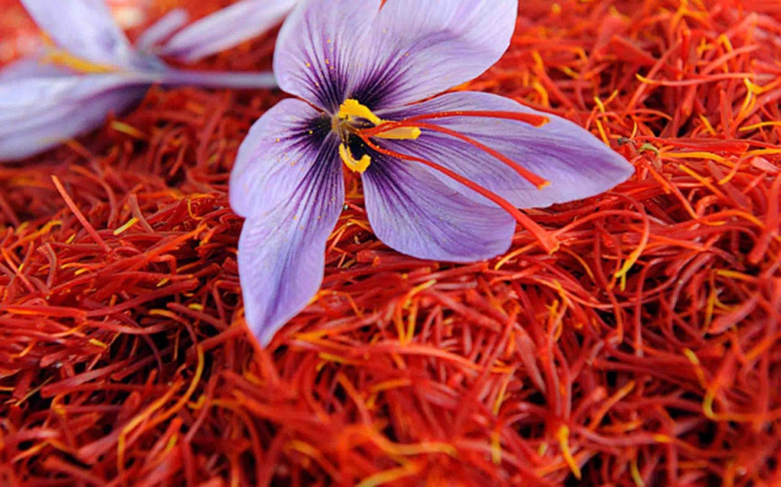Export of saffron by Rama Food Company